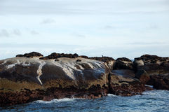 Seal Island. Near Cape Town - South Africa Stock Images