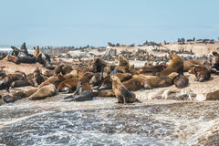 Seal Island in Cape town South Africa Stock Photo
