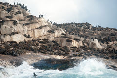 Seal Island in False Bay, South Africa royalty free stock image