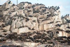 Seal Island In False Bay, South Africa