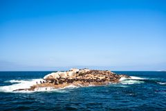 Seal Island Mossel Bay Stock Photo