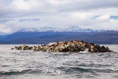 Seal Island near Ushuaia stock images