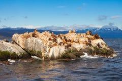 Seal Island near Ushuaia royalty free stock photography