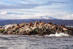 Seal Island near Ushuaia Royalty Free Stock Photos
