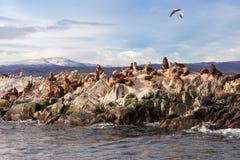 Seal Island near Ushuaia Stock Photography