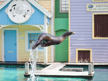 Seal jumping out of the water in a live show Stock Photo