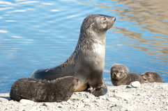 Seal with kids Stock Images