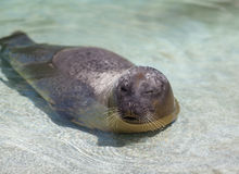 Seal Stock Images