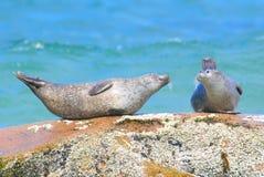 Free Seal Love Stock Image - 9935631