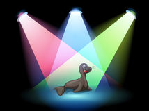 A seal in the middle of the stage Royalty Free Stock Photos