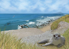 Seal ocean cliff beach Royalty Free Stock Image