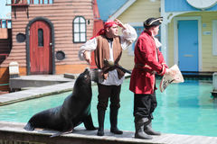 Seal  out of the water in a live show Royalty Free Stock Photography