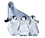 Seal and penguins. Isolated on white background. Stock Image