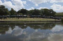 Señal pionera de la plaza en Dallas, TX Imagenes de archivo