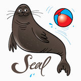 Seal playing with ball on stage Stock Photography