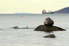 Seal in the port Stock Photography
