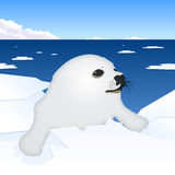 Seal puppy vector illustration Stock Image