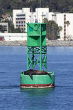Seal Resting on Ocean Buoy Stock Photography