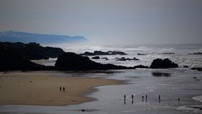 Seal Rock Stock Photography