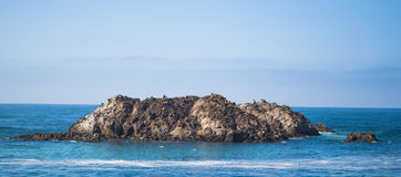 Seal Rock. A rock off of Monterey Bay full of seals Royalty Free Stock Photos