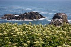 Seal Rock in Oregon Royalty Free Stock Photo