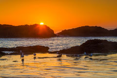 Seal Rock Wayside Royalty Free Stock Photos