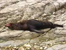 Seal on rocks Stock Photo