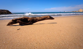 Seal shaped driftwood on beach. Wooden driftwood shaped like a seal on a sandy beach in Mexico royalty free stock photos