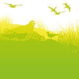 Seal on the shore with seagulls. Seal on the green shore with seagulls royalty free illustration