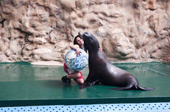 Seal show Royalty Free Stock Photography