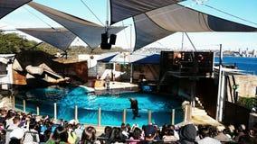 Seal Show Stock Photos