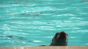 The seal slowly swims and jumps out of the water. The seal slowly swims and jumps out of the water in slow motion stock video