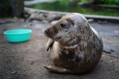 Seal sub Stock Photo