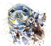 Seal T-shirt graphics, marine seal illustration with splash watercolor textured background. Illustration watercolor fur seal for fashion print, poster for royalty free illustration
