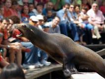 Seal, Training, Cabárceno Royalty Free Stock Photo