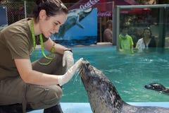 Seal training Stock Photos