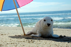 Seal and umbrella 3 Royalty Free Stock Photography