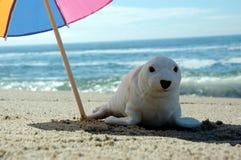 Seal and umbrella 3. Seal under a umbrella royalty free stock photography