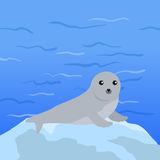 Seal Vector Illustration in Flat Design Royalty Free Stock Photo