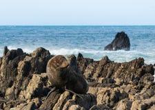 Seal Warming Up Stock Image