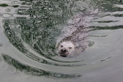 A seal Stock Images