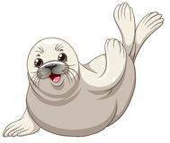 Seal with white skin greeting Royalty Free Stock Images