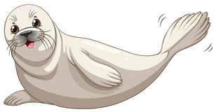 Seal with white skin smiling Stock Image