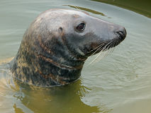 Seal. Stock Images