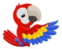 Señalar el pájaro del loro Fotografía de archivo libre de regalías