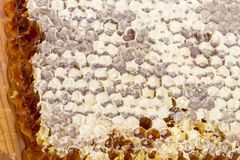 Sealed honeycomb Royalty Free Stock Images