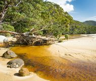 Sealers Cove River. Tannin river of Sealers Cove, Wilsons Promontory National Park, Victoria, Australia stock images