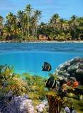 sealife пляжа тропическое Стоковые Фото