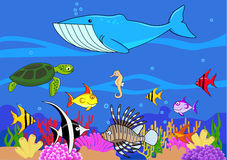 Sealife Stock Image