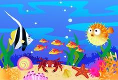 Sealife Stockfotos